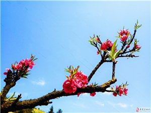 春天里的花花草草湖光山色