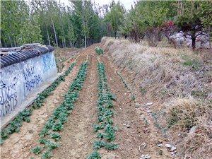 这样是绿化环境还是造福于人民