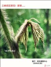 今日三峡坝区那花!那草……飞虹手机路过