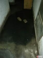 尚武街地下室臭了三四年,�嵌家�泡塌了,有人管�幔�