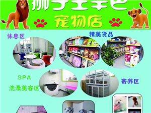 狮子王辛巴宠物店