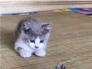 凈梵貓三個月大
