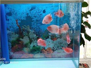 一米下滤鱼缸出售