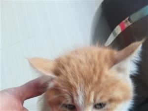 本人在零公里附近马路上捡到一只小奶猫