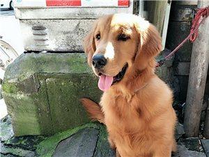 尋找喜歡狗狗的粑粑或者是麻麻,非誠勿擾
