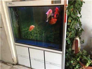 便宜出售鱼缸  下过虑