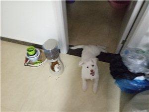 請愛狗的人給它一個家