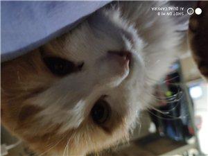 澳门拉斯维加斯网址八达岭镇大浮坨小橘猫求收养