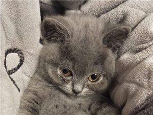 求购小猫咪
