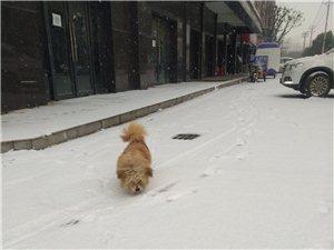 尋找愛狗人士,本人在桐城市政府附近,因種