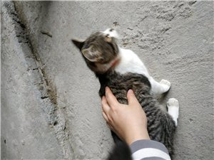 想領養只小貓咪,不限種類