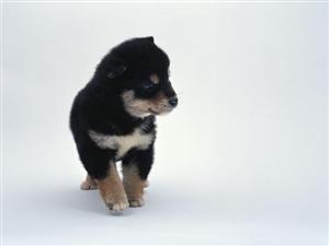 小黑狗求领养