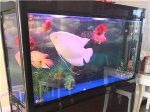 缸和鱼出售,也可分开出售,价格具体议