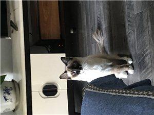 貓咪有償領養
