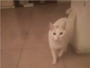 串串猫,因本人有事,有偿领养。