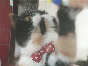 加菲猫借配
