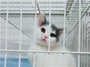 名貓公館出售各種寵物貓及用品
