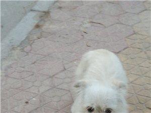 超級乖巧的小寵物狗