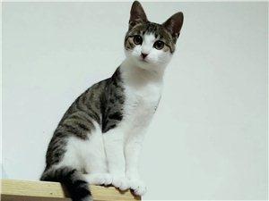 莫旗本地求購2至4月大貓貓