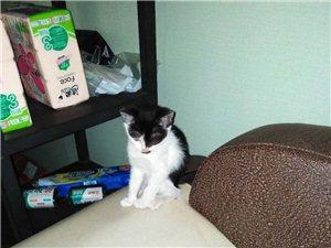 可爱猫咪找新家