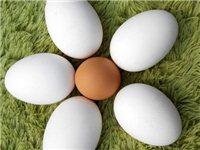 家养鹅蛋 至于功效可自己百度,超级适合孕妇,儿童,老人  自己家养的几只鹅,自己吃不了,想吃的...