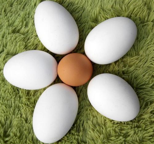 家養鵝蛋 至于功效可自己百度,超級適合孕婦,兒童,老人  自己家養的幾只鵝,自己吃不了,想吃的...