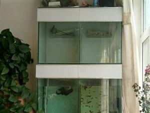 本人有自己用繁殖鱼仔组缸一套,现在低价出售,设备齐全,有意者联系