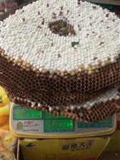出售蜂蛹明天���市�人拓�,�С不铙w,需要的速度�系,��微信同�17323582625常年出售蜂蛹蜂...