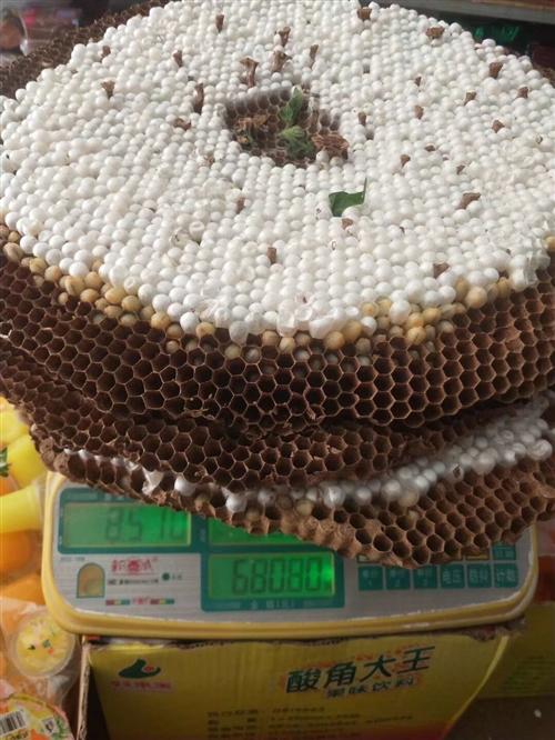 出售蜂蛹明天畢節市內送貨,帶巢活體,需要的速度聯系,電話微信同號17323582625常年出售蜂蛹蜂...