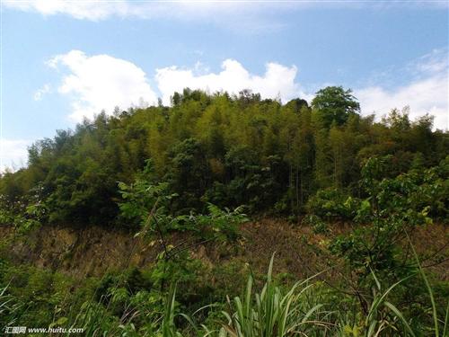出售1000亩山林竹林林地,证件齐全,有意者联系13929220227