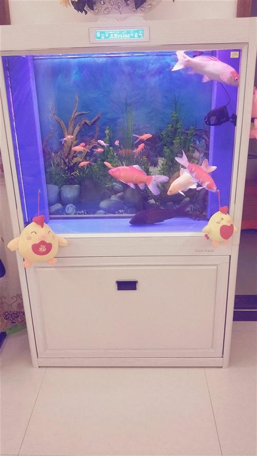 森森1米1鱼缸处理1700元,买了正1年,要给女儿换钢琴倒地方,有要的联系我