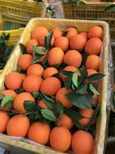 脐橙要的私我,量大优惠15618526916