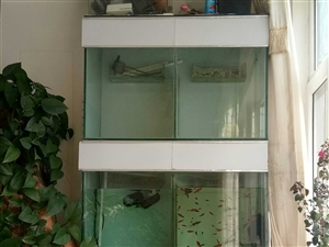 本人有繁殖鱼仔的组缸一套,现在低价出售,有要的联系:13619378838