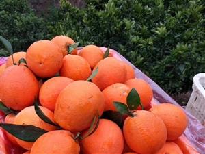 ??????最好的水果,不在市场,更不在超市,而是在你下单时它还挂在树上。古蔺孔氏甜橙,新鲜味美,营...