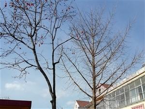 自家院内柿子树和银杏树,每年秋天柿子挂满枝,银杏树也是结果子的多年老树,因家中准备盖房子,所以想转给...