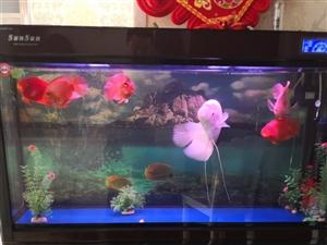出售森森顶虑鱼缸和鱼,一条红眼招财,三条红鹦鹉,需要的联系!