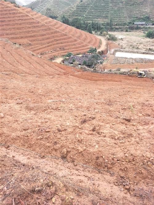 求租县城十公里内荒山,能种五百棵左右脐橙,水路方便,电话13479748058