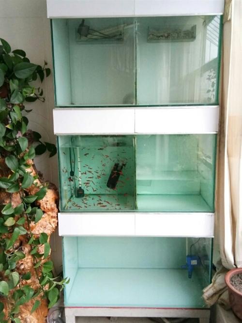 本人有组缸一套,里面设施齐全,3层,总共高2米,可分开,宽90,玻璃是10个的,价格优惠,只要你看中...