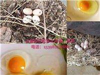 自己散养老母鸡下的草鸡蛋,家里面有鸡蛋   鸭蛋   鹅蛋。平时出售公鸡   母鸡   ,都是散养。...