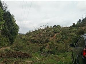 果山转让,位置在吉潭慈溪大路边,山顶山脚有路,1200株位置,果树已砍,红土壤,果园设施齐全,山下有...