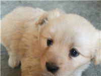 家里养的母狗生了4?#36824;?#23453;宝,其中黑白是公,其它三只是母,3月4日生的,品种很漂亮,胖嘟嘟的很可爱,小...