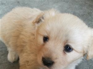 家里�B的母狗生了4只狗����,其中黑白是公,其它三只是母,3月4日生的,品�N很漂亮,胖嘟嘟的很可�郏�小...