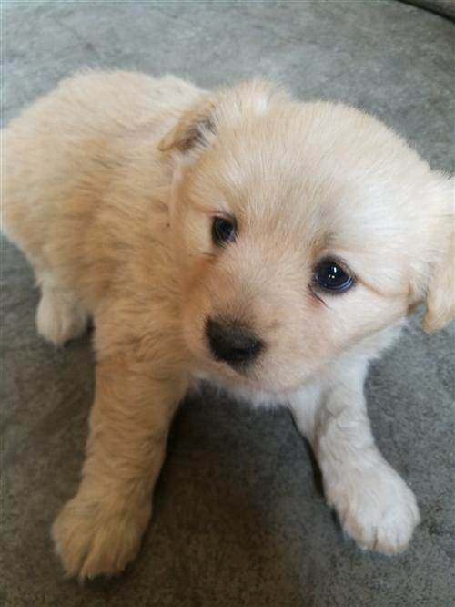家里养的母狗生了4只狗宝宝,其中黑白是公,其它三只是母,3月4日生的,品种很漂亮,胖嘟嘟的很可爱,小...