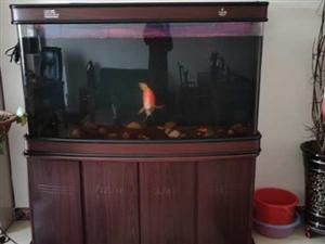 鱼缸长1.5     高1.5     宽0.45        缸内鱼也卖    鱼长0.4