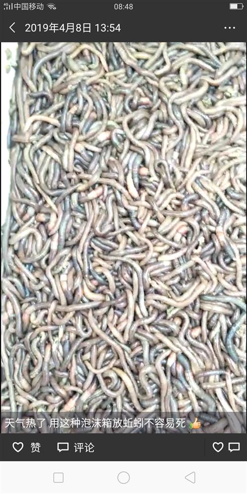 大量回收野生鲜活蚯蚓