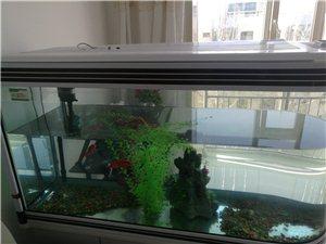 出售魚缸 有意者聯系