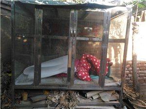 小吃架子,不绣钢框架+加厚玻璃,内两层结构,规格130X84x120