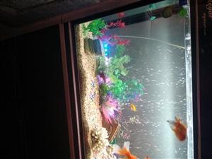 水族鱼缸1.2米观赏鱼一套,送设备和鱼,家中没人养了,喜欢的联系我,不议价,上过滤,