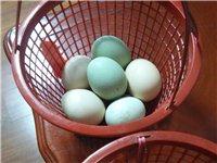 自己家散养的8只鸡5只红头鸭今年春天刚开始下蛋,玉米蔬菜喂养,纯绿色食品,现对外出售,鸡蛋一元一个,...