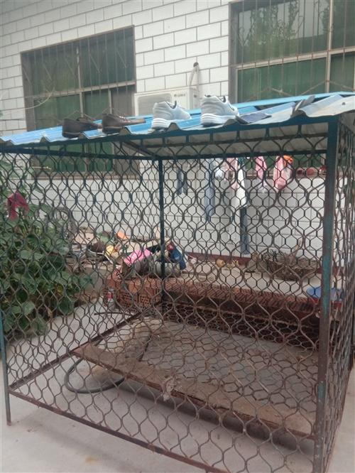 闲置1.8×1.8米狗笼,用不上了!转给有需要的人!